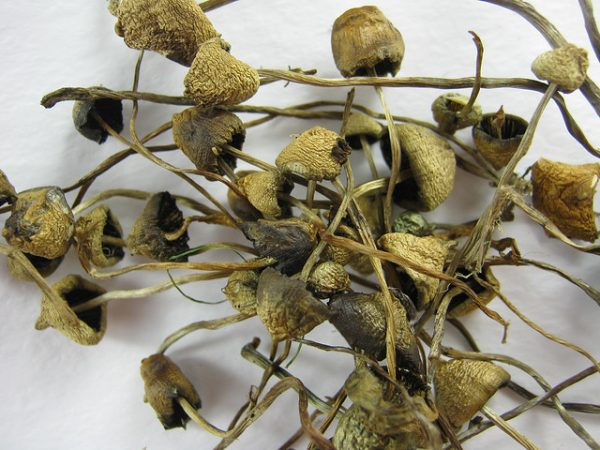 buy liberty caps